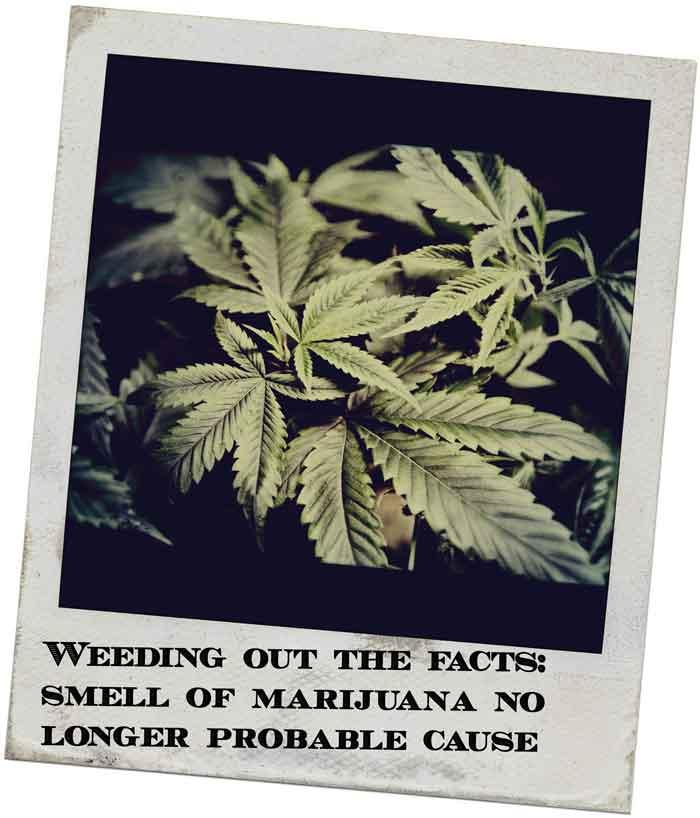 marijuana castillo law